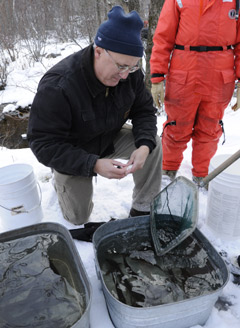 reared frost fish about to released into the wild