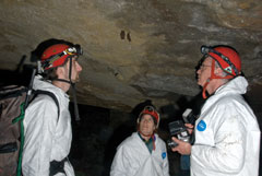 Three bat biologists in white protective suits look at two bats on a cave ceiling