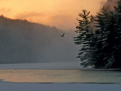 A bald eagle flying over a misty river with a glowing orange sky and forest behind it.