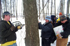 Students drill holes in maple trees in preparation for maple syrup production