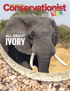 The front cover of the Winter 2018 issue of Conservationist for Kids features an elephant and ivory
