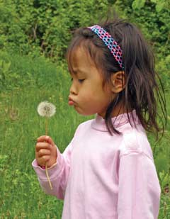 A young girl examines a dandelion