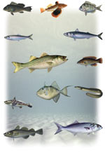 various saltwater fish