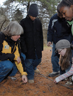 A teacher and students outside looking at animal scat in pine needles