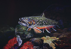 A watercolor painting of a brook trout underwater