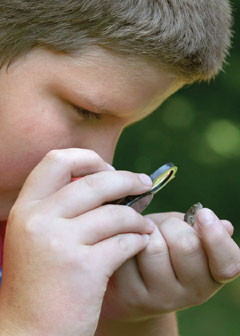 A boy looks at a small frog with a hand lens