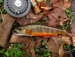 A brook trout on some dead leaves next to a reel