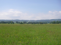 grassland with trees in the far end