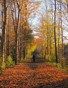 A person and a dog walking on a leaf-covered, tree-lined path in fall