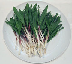 A bunch of wild leeks on a white plate