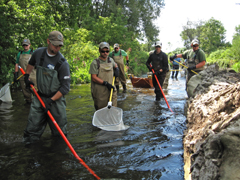 Biologists wearing waders and carrying nets walk down the center of a stream