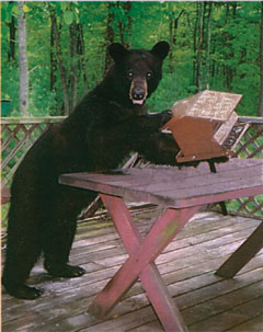 A black bear leans on a picnic table on a deck while holding a bird feeder