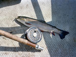A brook trout lying on a mat beside a fishing rod