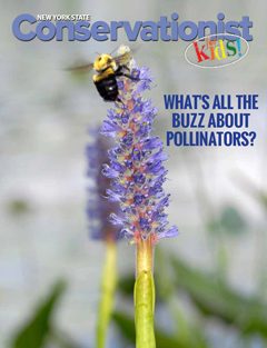 The front cover of the April 2017 Pollinators issue of Conservationist for Kids features a bumblebee