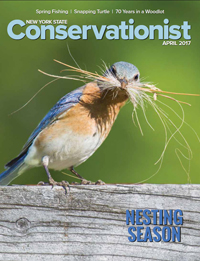 An eastern bluebird by Laurie Dirkx graces the front cover of the April 2017 issue of Conservationist