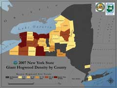 distribution map for giant hogweed in New York State