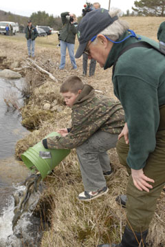 A young boy dumps a bucket of small trout into a brook