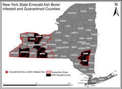 A map of NY showing EAB infested counties and quarantine zone.