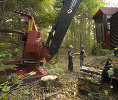 A timber harvesting operation