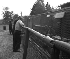 A man leaning on a railing looking at animals in a cage at the zoo