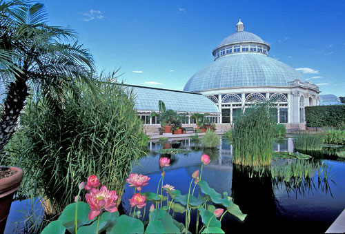 A glass conservatory building seen across a pond with water lilies and grasses growing in the water