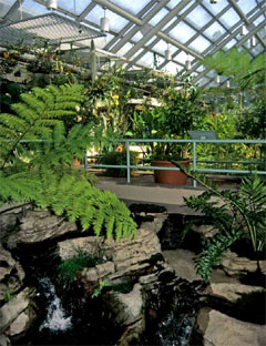 Interior of the glass-roofed aquatic house with plantings, walkways and small waterfall