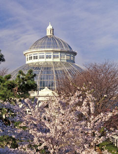The glass dome of a conservatory in the background with pale pink flowered trees in the foreground
