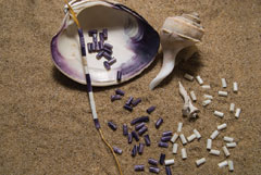 white and purple wampum beads and the clam shells on a sandy beach