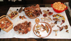 A table displaying many varieties of edible mushrooms