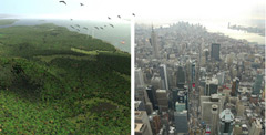 Two images of Manhattan, forested in the 1600s and completely developed in 2000