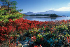 Bright red foliage on low-growing plants with a lake and mountains in the distance