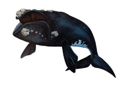 Color illustration of a right whale