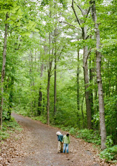 Two young boys stare up a the tall forest canopy from a trail in the woods