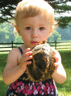 A cute young blonde toddler holding a turtle