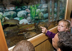 Children looking at fish in an aquarium