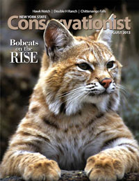image of Conservationist cover--bobcat