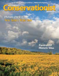 A field of goldenrod by photographer Melissa Groo graces the cover of the August 2014 Conservationist