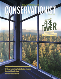 The cover of the August 2019 issue of Conservationist features the view from a fire tower