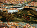 A stream curring through rock formations with fall leaves in it