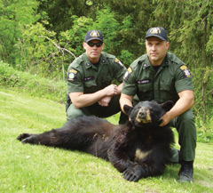 Two officres with a dead black bear