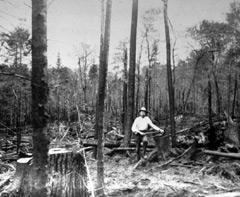 A man standing in a burned forest