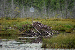 A beaver lodge with a dish antenna sticking out of it