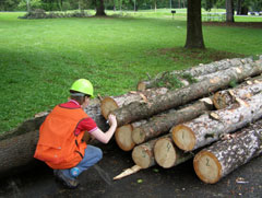 A person crouching next to a group of cut trees