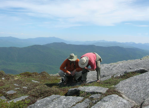 Two people on a rocky mountain summit examining the low vegetation