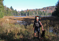 A man hiking near an Adirondack wetland