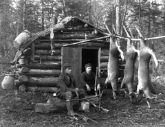1920 photo of deer hanging outside a small log deer camp