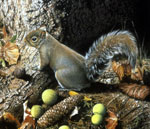 A detail of a painting showing a squirrel at the base of a tree with nuts, leaves and pinecones