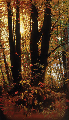 An oil painting by Mark Verna of a forest in the fall with sunlight filtering through the foliage
