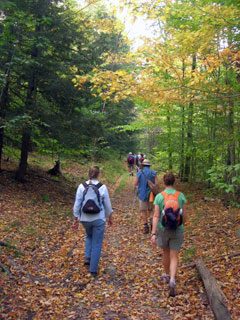 A group of hikers on a leaf-covered trail through the forest