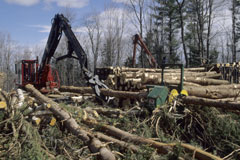 A logging operation